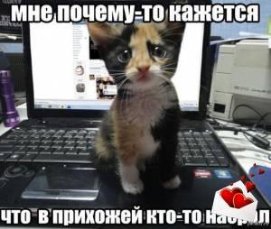 Картинка с приколом про кота